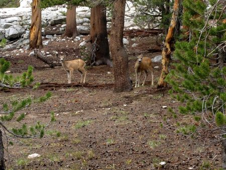These Deer owned the trail. We literally had to go off the trail to continue. They would not move!